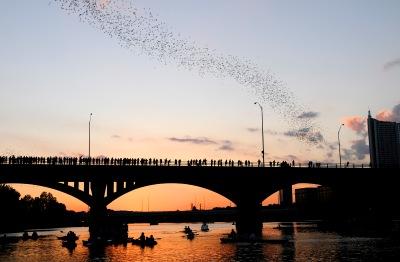 austin-bats-1